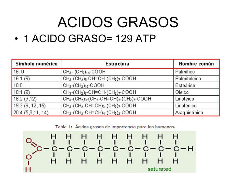 ACIDOS GRASOS 1 ACIDO GRASO= 129 ATP