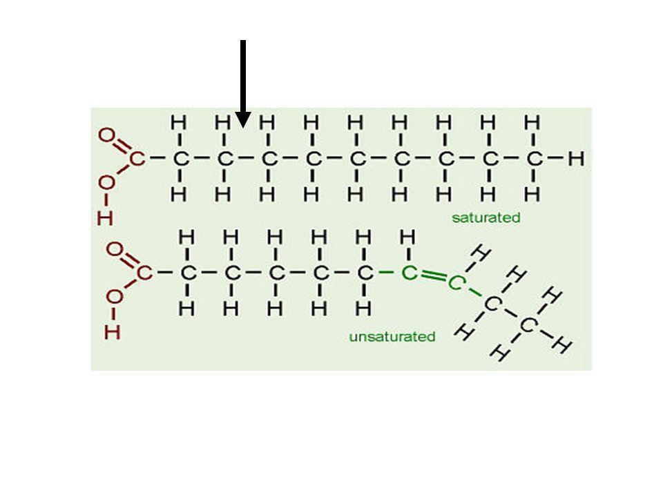 La β-oxidación es una secuencia de cuatro reacciones en que se separan fragmentos de dos carbonos desde el extremo carboxilo (–COOH) de la molécula; estas cuatro reacciones se repiten hasta la degradación completa de la cadena.