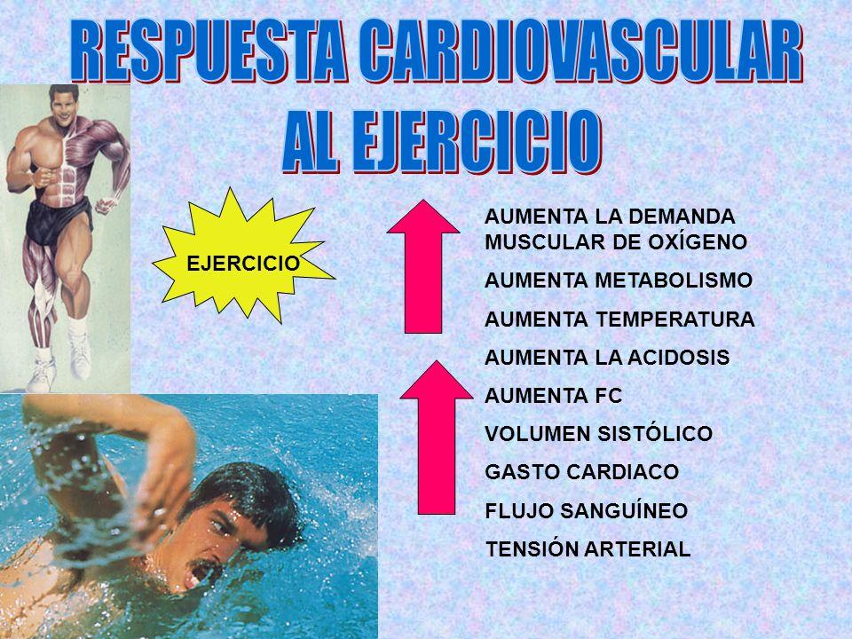 EJERCICIO AUMENTA LA DEMANDA MUSCULAR DE OXÍGENO AUMENTA METABOLISMO AUMENTA TEMPERATURA AUMENTA LA ACIDOSIS AUMENTA FC VOLUMEN SISTÓLICO GASTO CARDIA