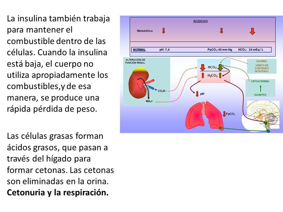 La insulina también trabaja para mantener el combustible dentro de las células.