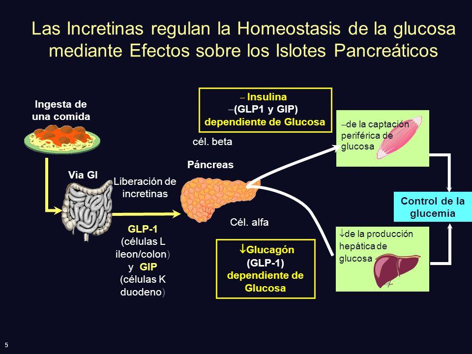 5 Las Incretinas regulan la Homeostasis de la glucosa mediante Efectos sobre los Islotes Pancreáticos Control de la glucemia GLP-1 (células L ileon/co