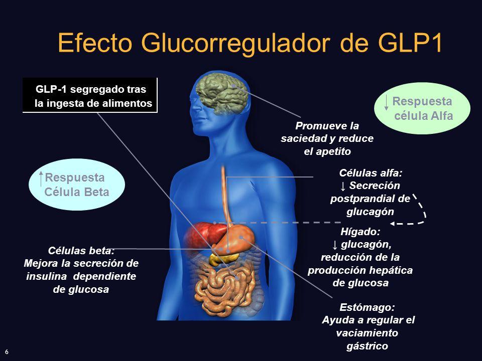 6 Efecto Glucorregulador de GLP1 Promueve la saciedad y reduce el apetito Células beta: Mejora la secreción de insulina dependiente de glucosa Hígado: