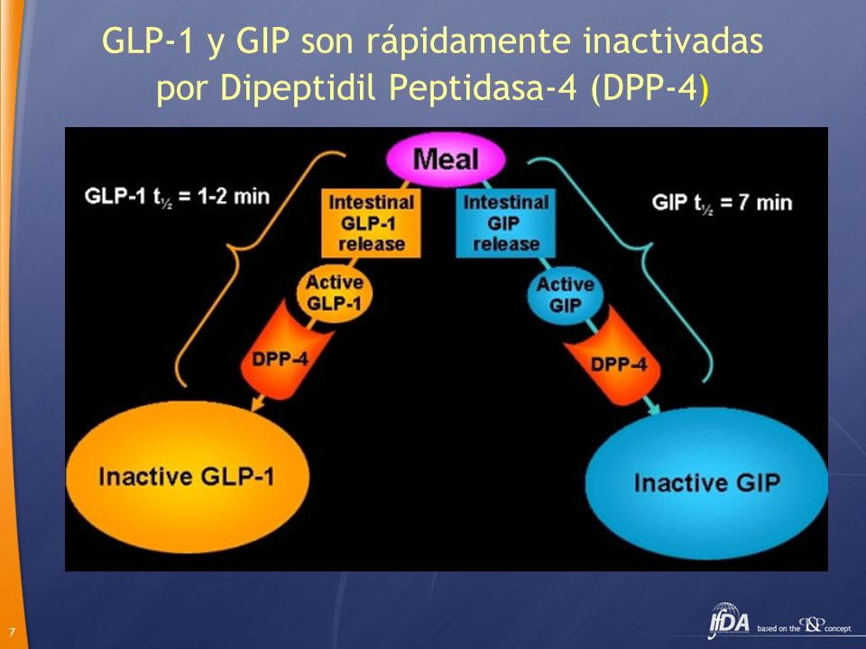 7 GLP-1 y GIP son rápidamente inactivadas por Dipeptidil Peptidasa-4 (DPP-4)
