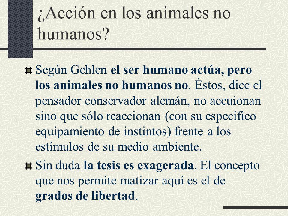¿Acción en los animales no humanos? Según Gehlen el ser humano actúa, pero los animales no humanos no. Éstos, dice el pensador conservador alemán, no