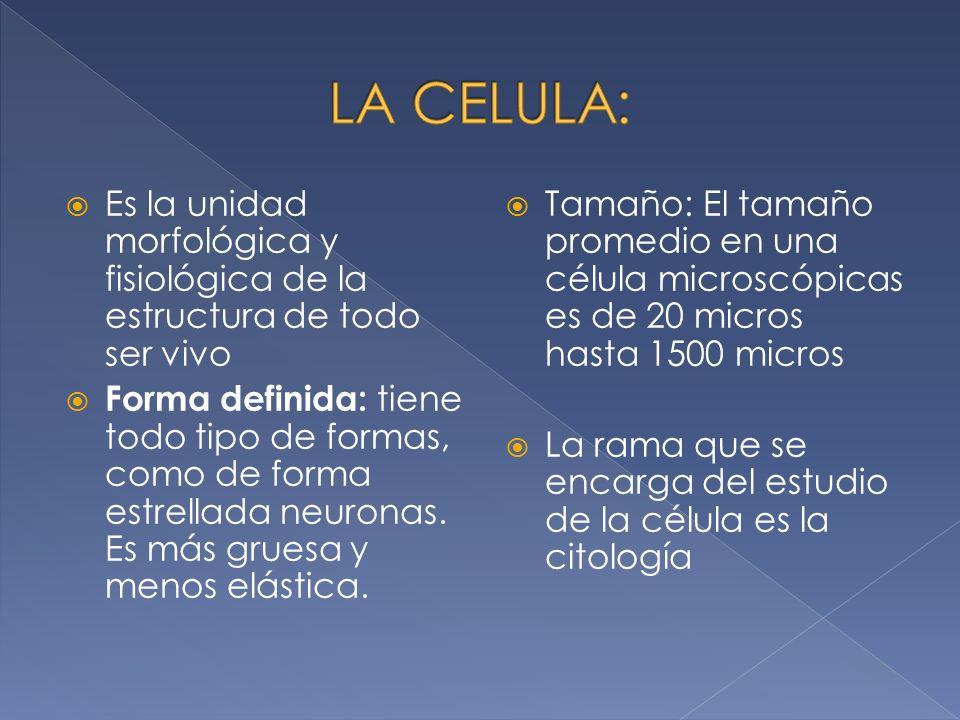 Célula: Estructura de la célula. Membrana fundamental. Citoplasma. Protoplasma. Organelos. Núcleo.