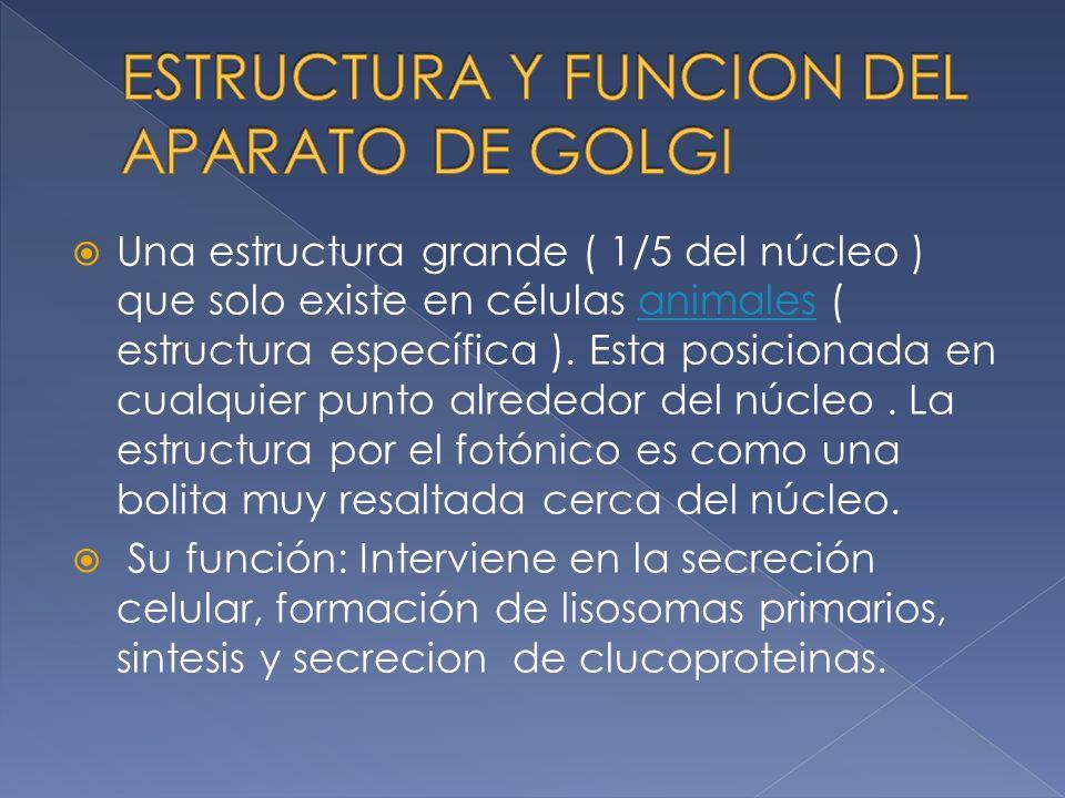 Una estructura grande ( 1/5 del núcleo ) que solo existe en células animales ( estructura específica ).