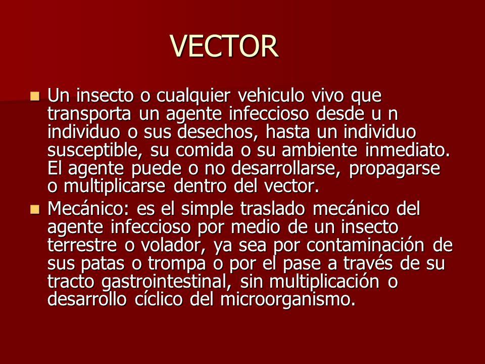 VECTOR Un insecto o cualquier vehiculo vivo que transporta un agente infeccioso desde u n individuo o sus desechos, hasta un individuo susceptible, su