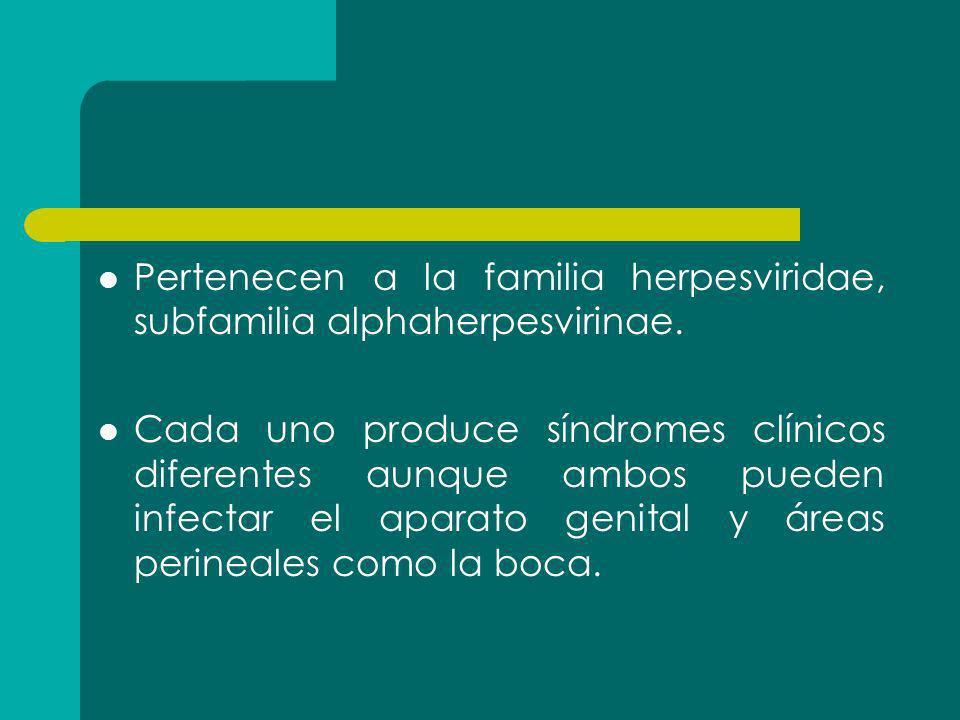 Pertenecen a la familia herpesviridae, subfamilia alphaherpesvirinae. Cada uno produce síndromes clínicos diferentes aunque ambos pueden infectar el a