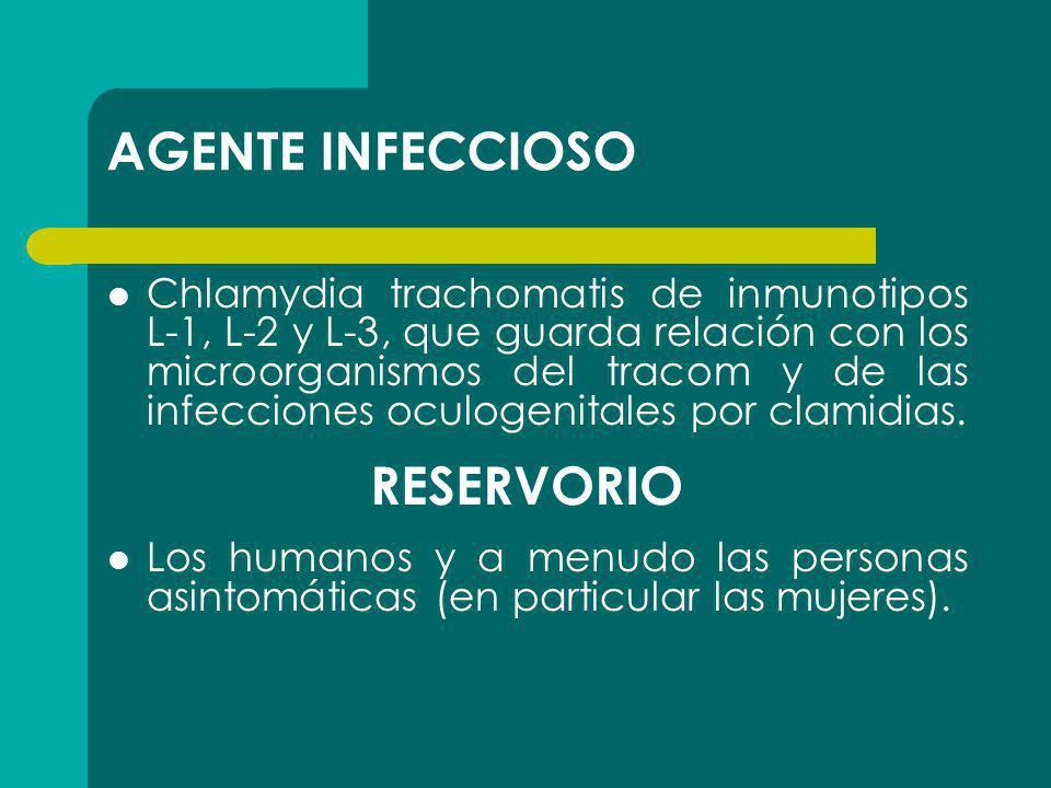 AGENTE INFECCIOSO Chlamydia trachomatis de inmunotipos L-1, L-2 y L-3, que guarda relación con los microorganismos del tracom y de las infecciones ocu