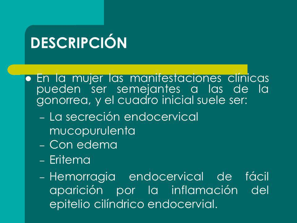 DESCRIPCIÓN En la mujer las manifestaciones clínicas pueden ser semejantes a las de la gonorrea, y el cuadro inicial suele ser: – La secreción endocer