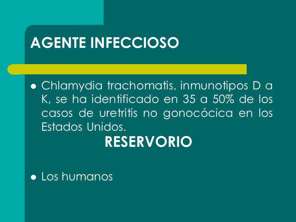 AGENTE INFECCIOSO Chlamydia trachomatis, inmunotipos D a K, se ha identificado en 35 a 50% de los casos de uretritis no gonocócica en los Estados Unid