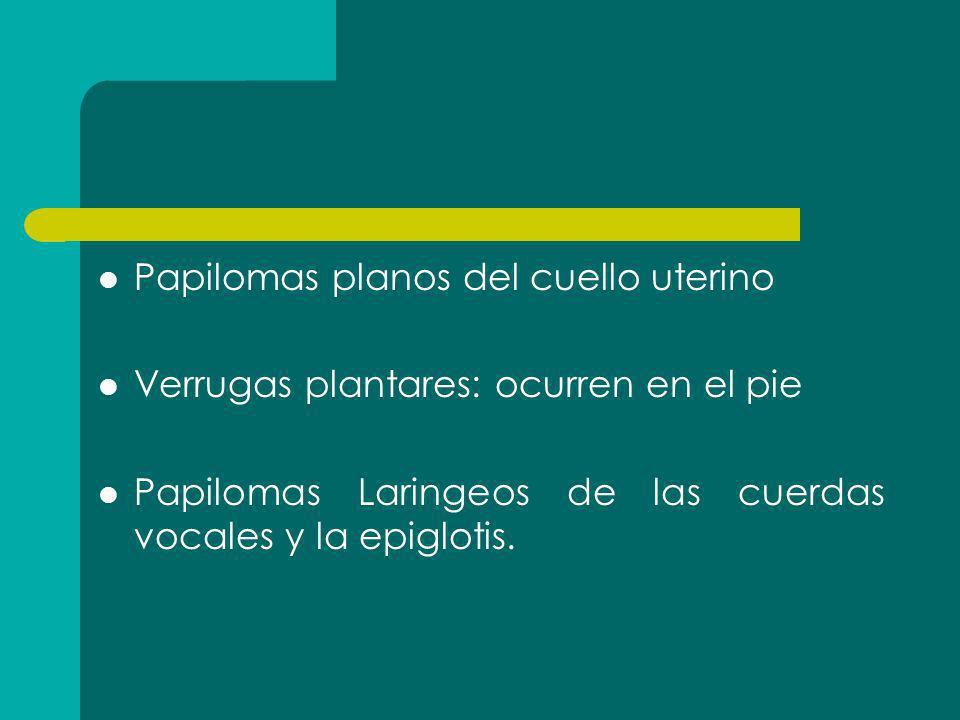 Papilomas planos del cuello uterino Verrugas plantares: ocurren en el pie Papilomas Laringeos de las cuerdas vocales y la epiglotis.
