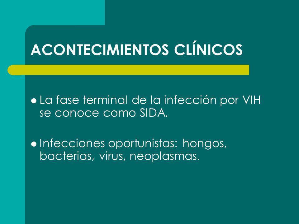 ACONTECIMIENTOS CLÍNICOS La fase terminal de la infección por VIH se conoce como SIDA. Infecciones oportunistas: hongos, bacterias, virus, neoplasmas.