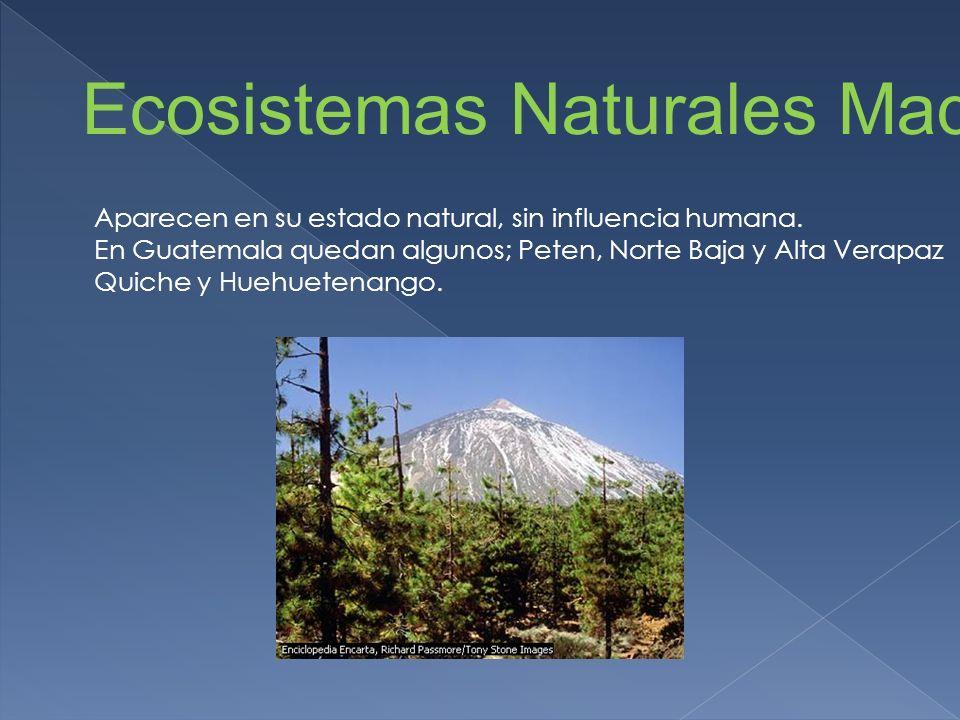 Ecosistemas Naturales Maduros Aparecen en su estado natural, sin influencia humana. En Guatemala quedan algunos; Peten, Norte Baja y Alta Verapaz Quic