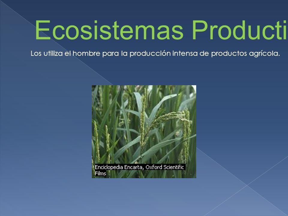 Ecosistemas Productivos Los utiliza el hombre para la producción intensa de productos agrícola.