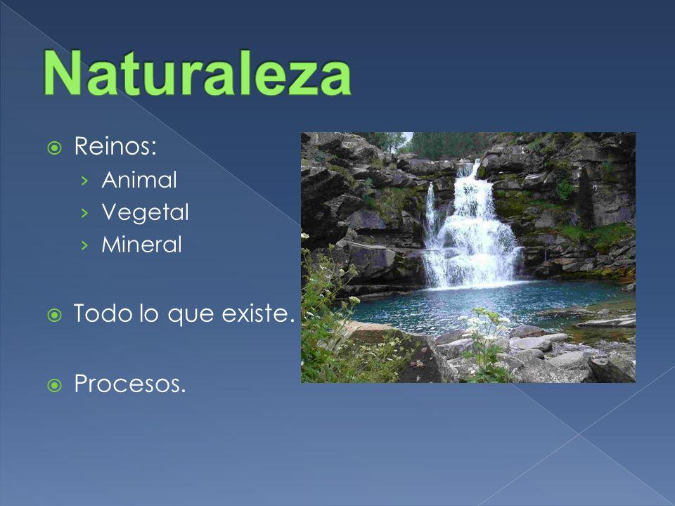Reinos: Animal Vegetal Mineral Todo lo que existe. Procesos.