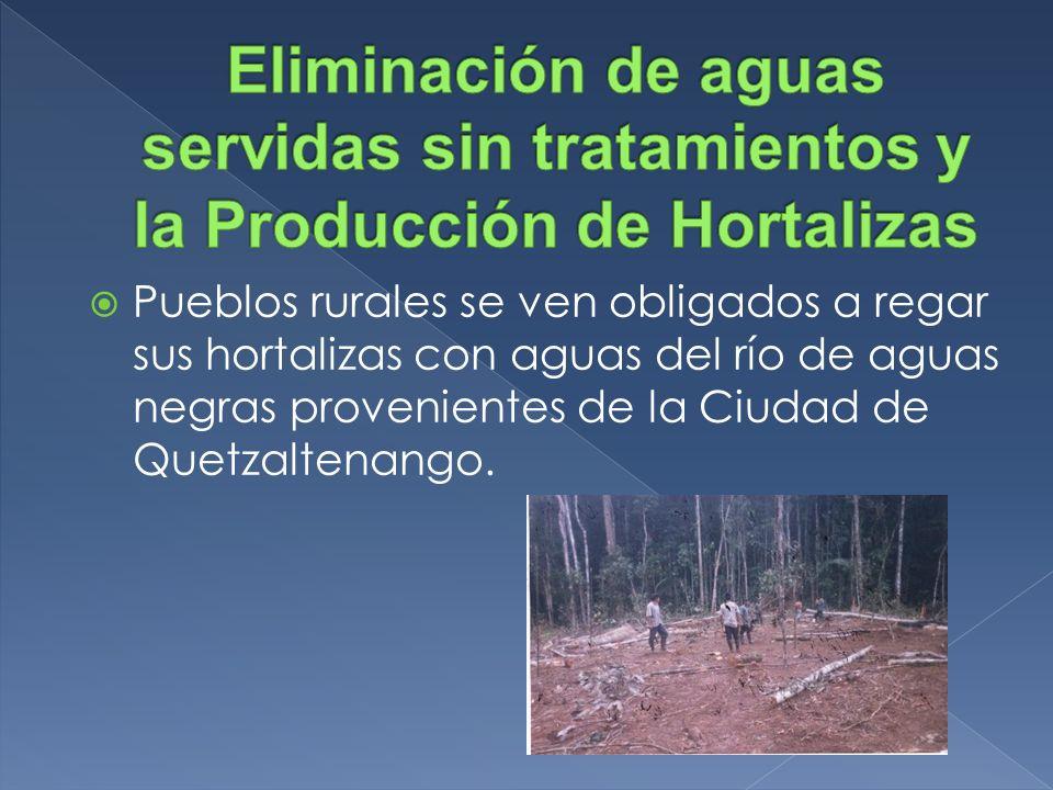 Pueblos rurales se ven obligados a regar sus hortalizas con aguas del río de aguas negras provenientes de la Ciudad de Quetzaltenango.