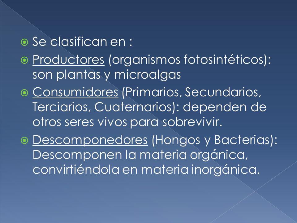 Se clasifican en : Productores (organismos fotosintéticos): son plantas y microalgas Consumidores (Primarios, Secundarios, Terciarios, Cuaternarios):