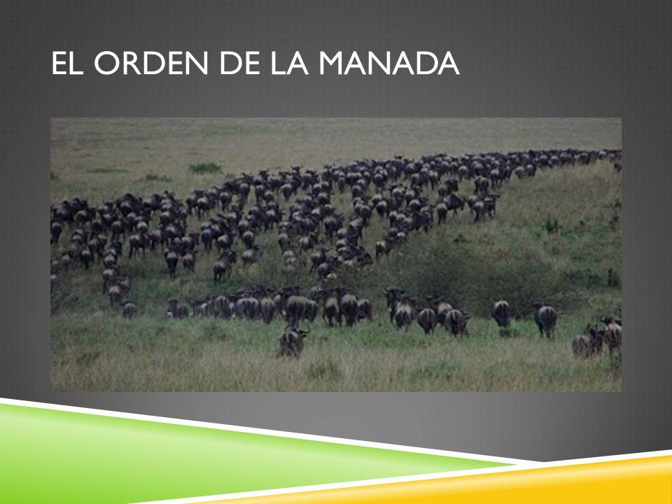EL ORDEN DE LA MANADA