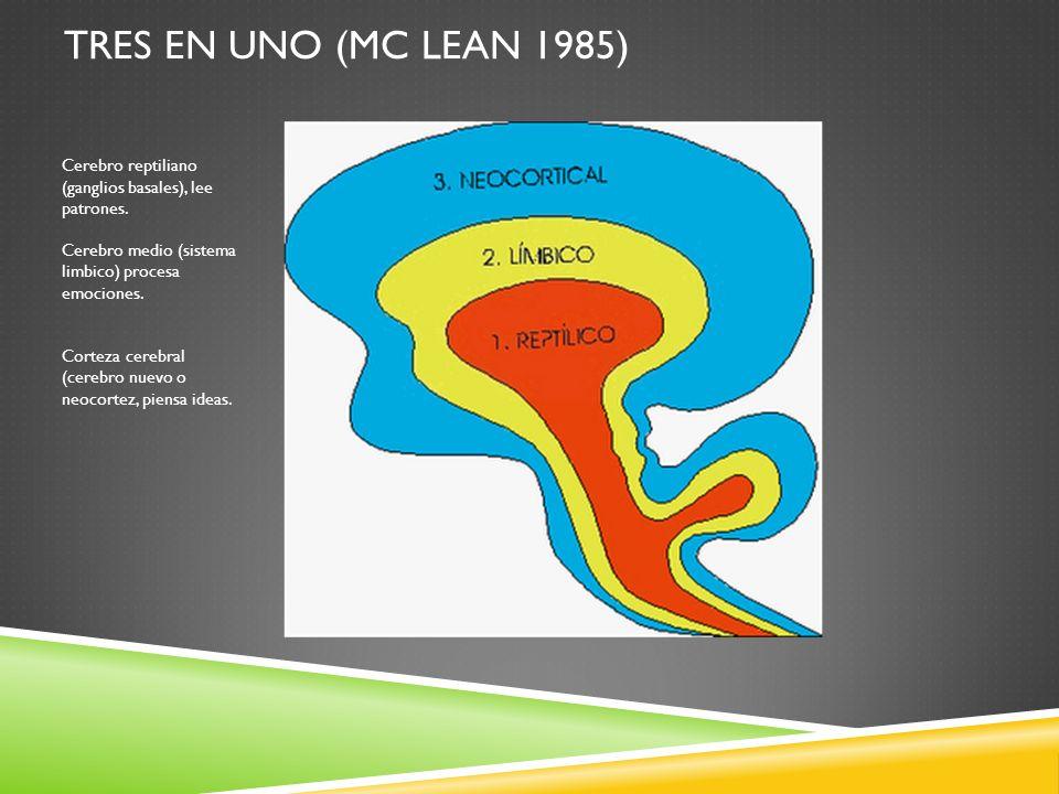 TRES EN UNO (MC LEAN 1985) Cerebro reptiliano (ganglios basales), lee patrones. Cerebro medio (sistema limbico) procesa emociones. Corteza cerebral (c