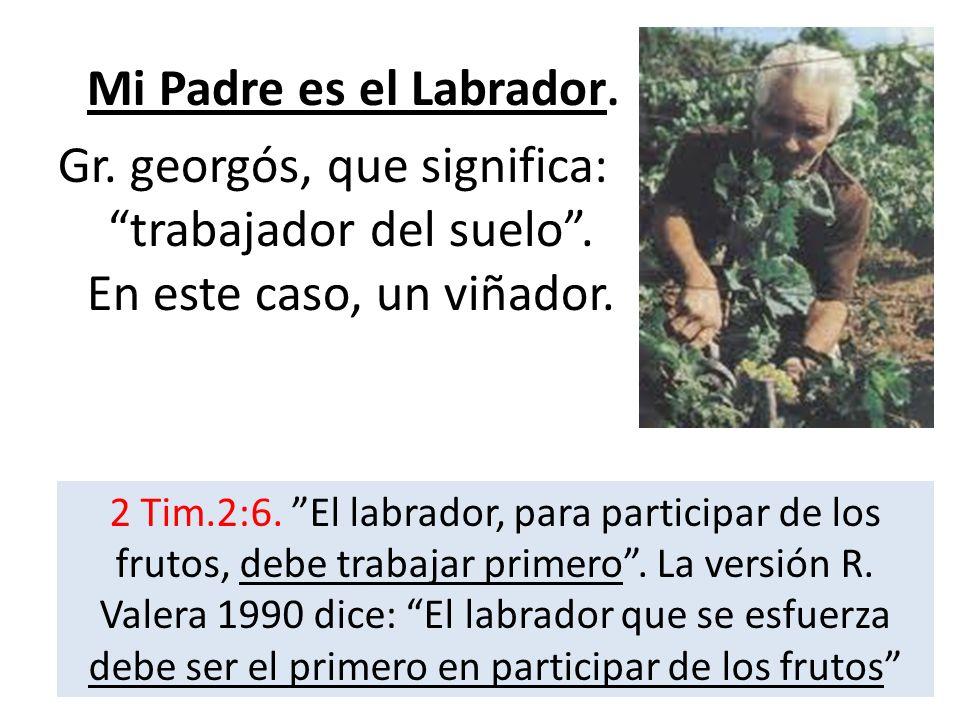 Mi Padre es el Labrador. Gr. georgós, que significa: trabajador del suelo. En este caso, un viñador. 2 Tim.2:6. El labrador, para participar de los fr