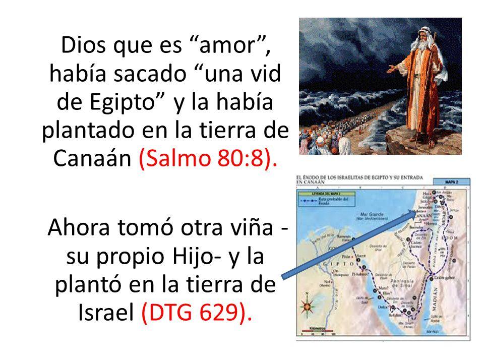 Dios que es amor, había sacado una vid de Egipto y la había plantado en la tierra de Canaán (Salmo 80:8). Ahora tomó otra viña - su propio Hijo- y la