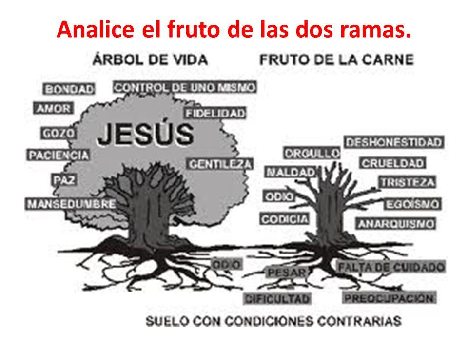 Analice el fruto de las dos ramas.