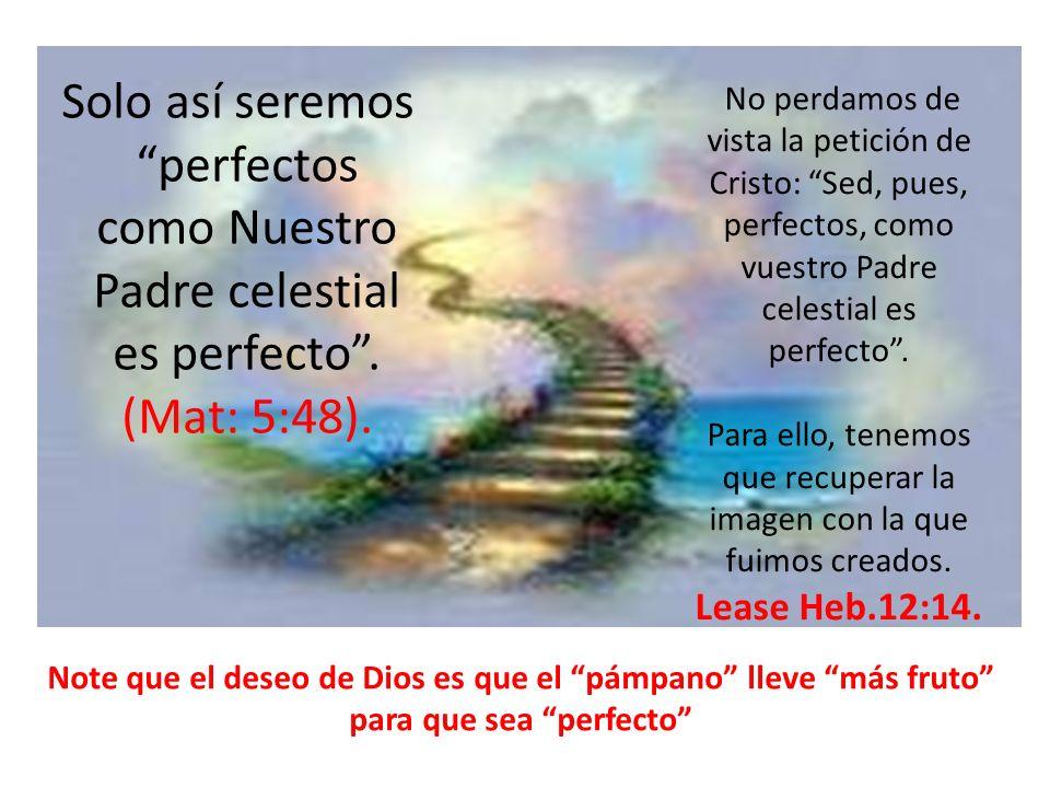 Solo así seremos perfectos como Nuestro Padre celestial es perfecto. (Mat: 5:48). Note que el deseo de Dios es que el pámpano lleve más fruto para que