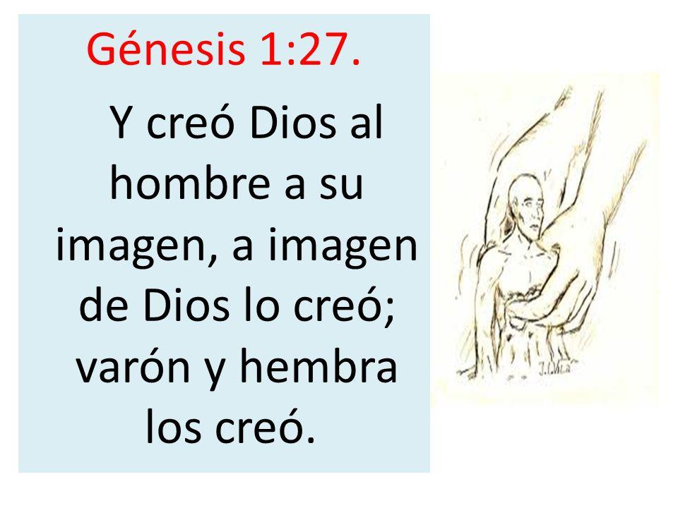 Génesis 1:27. Y creó Dios al hombre a su imagen, a imagen de Dios lo creó; varón y hembra los creó.