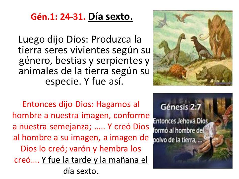 Gén.1: 24-31. Día sexto. Luego dijo Dios: Produzca la tierra seres vivientes según su género, bestias y serpientes y animales de la tierra según su es