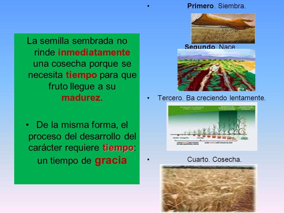 La semilla sembrada no rinde inmediatamente una cosecha porque se necesita tiempo para que fruto llegue a su madurez. tiempoDe la misma forma, el proc