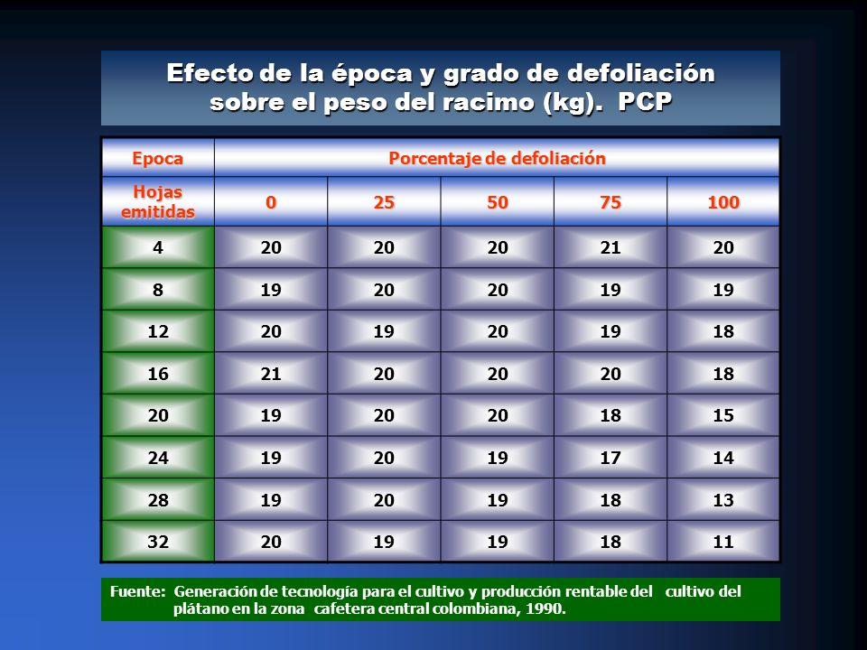 Epoca Porcentaje de defoliación Hojas emitidas 0255075100 420 2120 81920 19 122019201918 162120 18 201920 1815 241920191714 281920191813 322019 1811 Fuente: Generación de tecnología para el cultivo y producción rentable del cultivo del plátano en la zona cafetera central colombiana, 1990.
