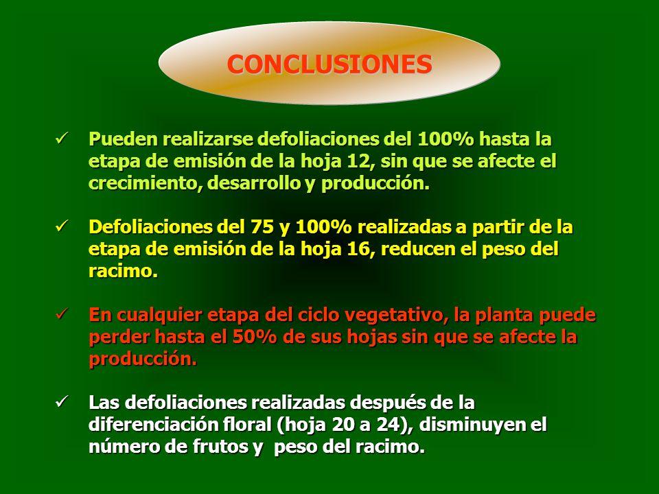 CONCLUSIONES Pueden realizarse defoliaciones del 100% hasta la etapa de emisión de la hoja 12, sin que se afecte el crecimiento, desarrollo y producción.