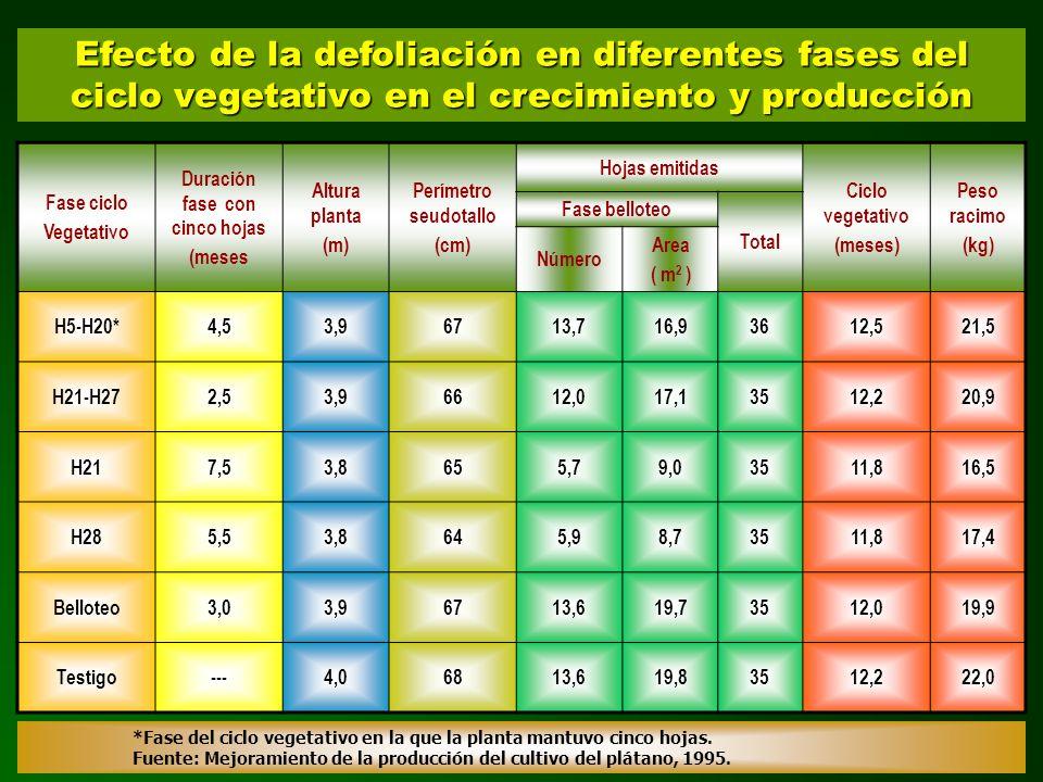 Fase ciclo Vegetativo Duración fase con cinco hojas (meses Altura planta (m) Perímetro seudotallo (cm) Hojas emitidas Ciclo vegetativo (meses) Peso ra