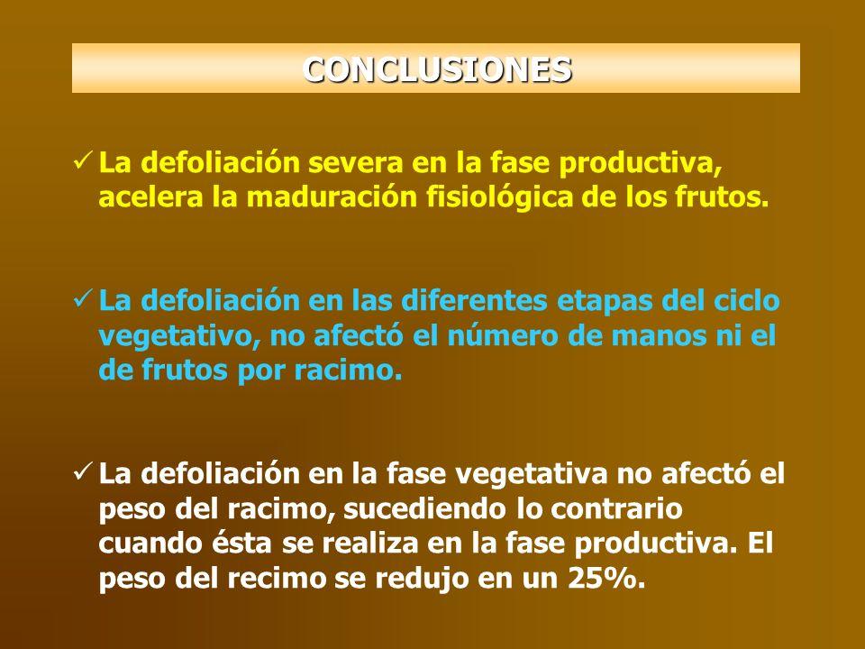 La defoliación severa en la fase productiva, acelera la maduración fisiológica de los frutos. La defoliación en las diferentes etapas del ciclo vegeta
