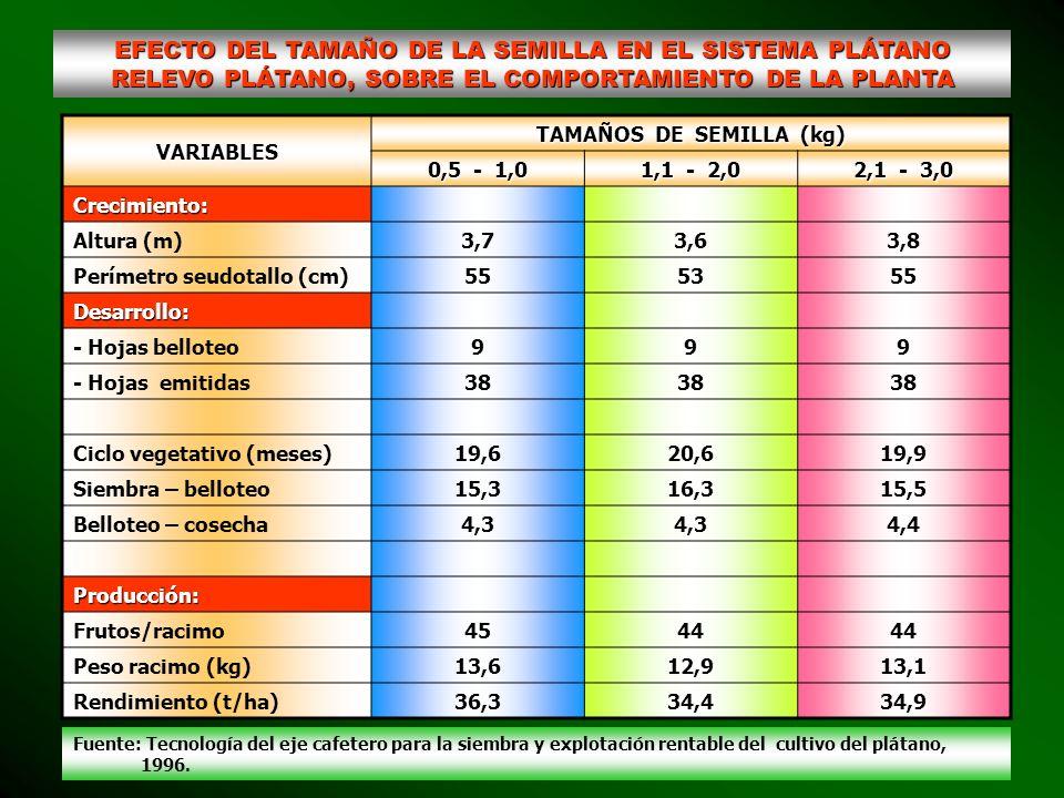 EFECTO DEL TAMAÑO DE LA SEMILLA EN EL SISTEMA PLÁTANO RELEVO PLÁTANO, SOBRE EL COMPORTAMIENTO DE LA PLANTA VARIABLES TAMAÑOS DE SEMILLA (kg) 0,5 - 1,0