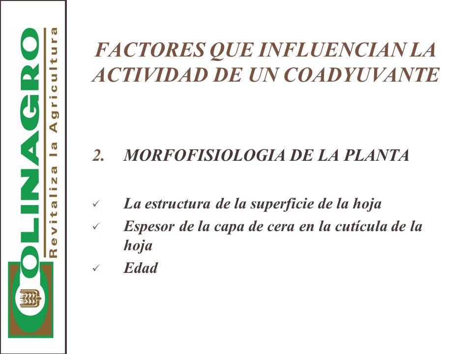 FACTORES QUE INFLUENCIAN LA ACTIVIDAD DE UN COADYUVANTE 2.MORFOFISIOLOGIA DE LA PLANTA La estructura de la superficie de la hoja Espesor de la capa de
