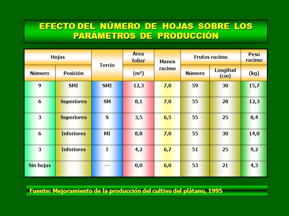 EFECTO DEL NÚMERO DE HOJAS SOBRE LOS PARÁMETROS DE PRODUCCIÓN HojasTercioÁreafoliarManosracimo Frutos racimo Peso racimo NúmeroPosición (m 2 ) Número Longitud (cm) (kg) 9SMI 12,37,0593015,7 6SuperioresSM8,17,0552812,3 3SuperioresS3,56,555258,4 6InferioresMI8,87,0553014,0 3InferioresI4,26,751259,2 Sin hojas---0,06,053214,3 Fuente: Mejoramiento de la producción del cultivo del plátano, 1995