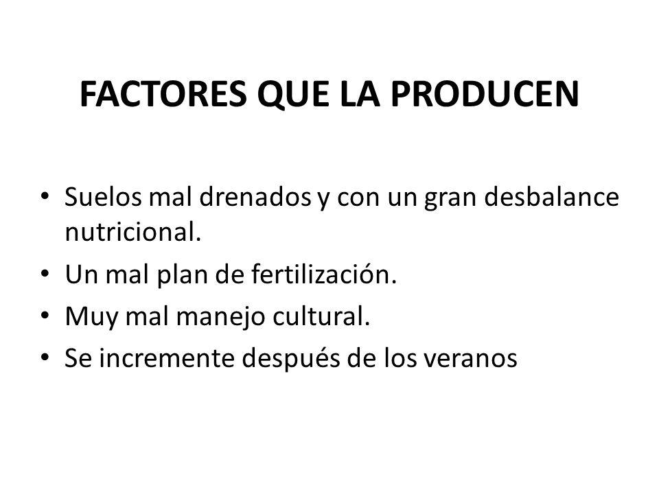 FACTORES QUE LA PRODUCEN Suelos mal drenados y con un gran desbalance nutricional. Un mal plan de fertilización. Muy mal manejo cultural. Se increment