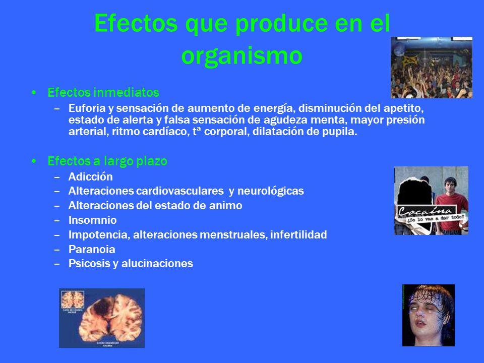 Efectos que produce en el organismo Efectos inmediatos –Euforia y sensación de aumento de energía, disminución del apetito, estado de alerta y falsa s
