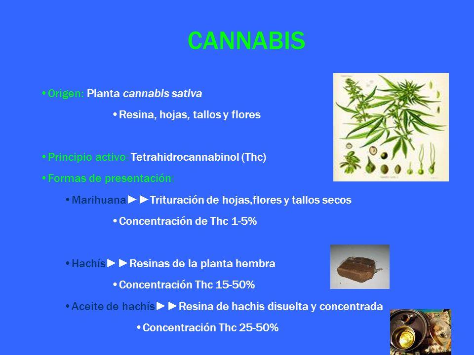 CANNABIS Origen: Planta cannabis sativa Resina, hojas, tallos y flores Principio activo: Tetrahidrocannabinol (Thc) Formas de presentación: MarihuanaT