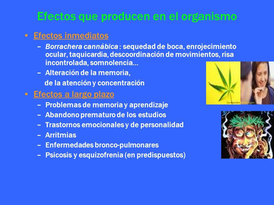 Efectos que producen en el organismo Efectos inmediatos –Borrachera cannábica : sequedad de boca, enrojecimiento ocular, taquicardia, descoordinación