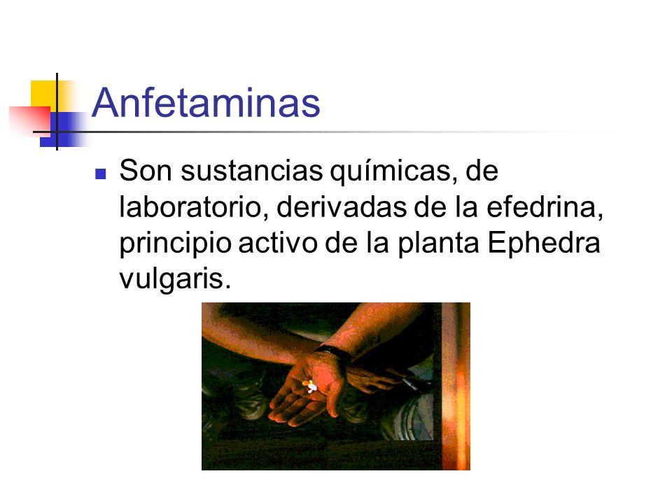 Anfetaminas Son sustancias químicas, de laboratorio, derivadas de la efedrina, principio activo de la planta Ephedra vulgaris.