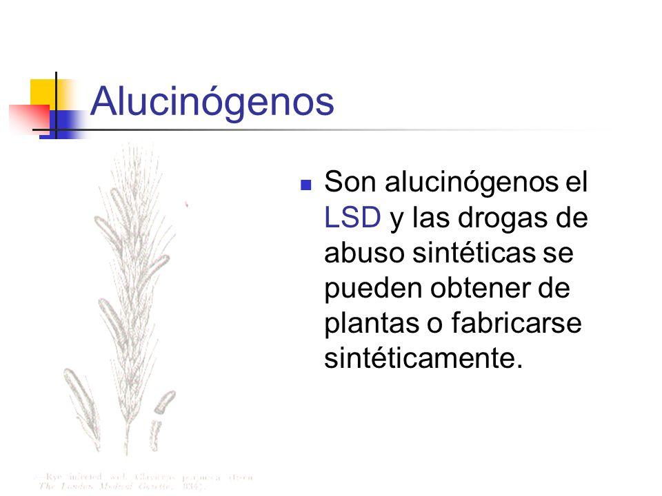 Alucinógenos Son alucinógenos el LSD y las drogas de abuso sintéticas se pueden obtener de plantas o fabricarse sintéticamente.