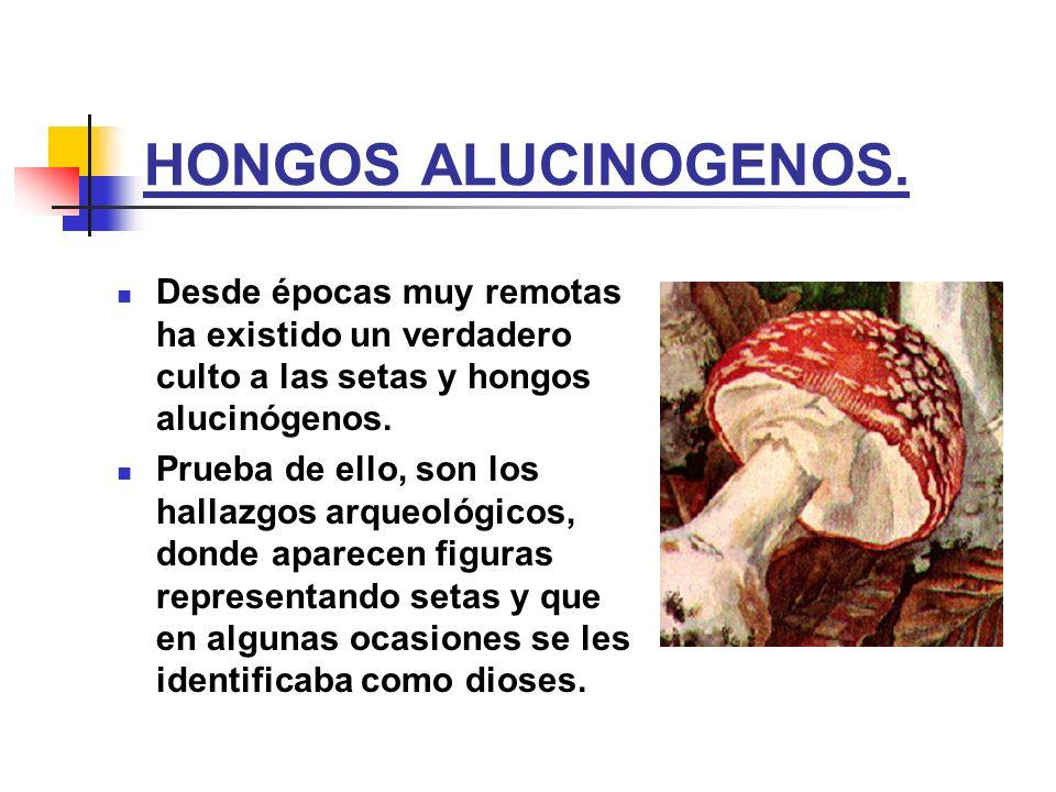 HONGOS ALUCINOGENOS. Desde épocas muy remotas ha existido un verdadero culto a las setas y hongos alucinógenos. Prueba de ello, son los hallazgos arqu