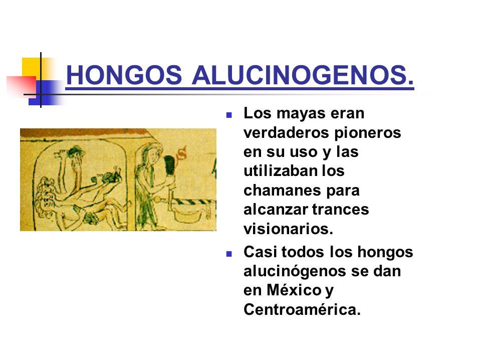 HONGOS ALUCINOGENOS. Los mayas eran verdaderos pioneros en su uso y las utilizaban los chamanes para alcanzar trances visionarios. Casi todos los hong