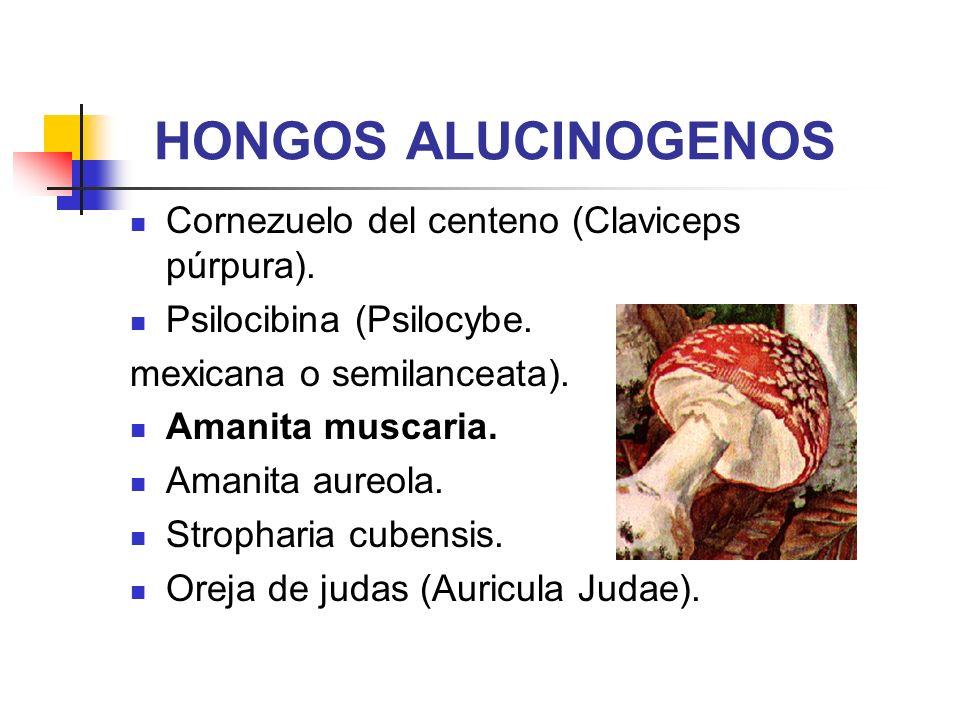 HONGOS ALUCINOGENOS Cornezuelo del centeno (Claviceps púrpura). Psilocibina (Psilocybe. mexicana o semilanceata). Amanita muscaria. Amanita aureola. S