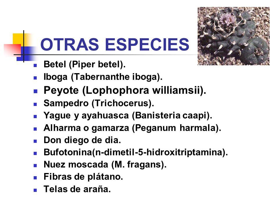 OTRAS ESPECIES Betel (Piper betel). Iboga (Tabernanthe iboga). Peyote (Lophophora williamsii). Sampedro (Trichocerus). Yague y ayahuasca (Banisteria c