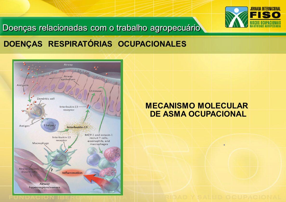 DOENÇAS RESPIRATÓRIAS OCUPACIONALES MECANISMO MOLECULAR DE ASMA OCUPACIONAL Doenças relacionadas com o trabalho agropecuário