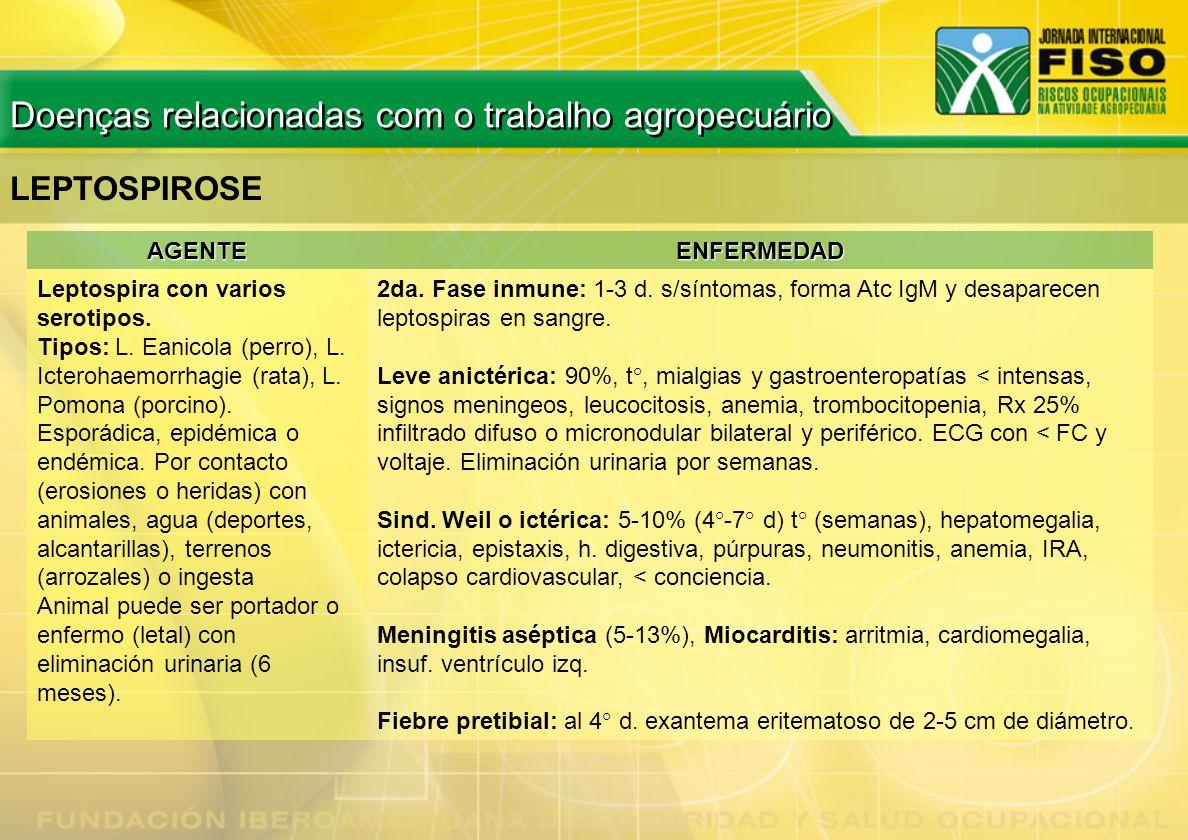 LEPTOSPIROSE AGENTEENFERMEDAD Leptospira con varios serotipos. Tipos: L. Eanicola (perro), L. Icterohaemorrhagie (rata), L. Pomona (porcino). Esporádi